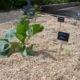 Jardin partagé à la CCMA de Villaines-la-Juhel