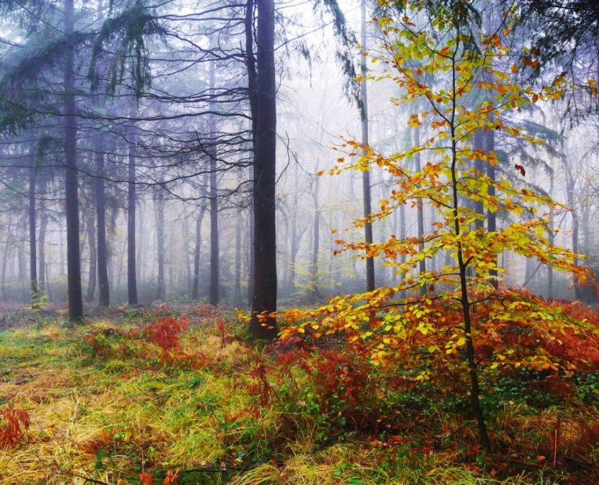 Forêt de la Corniche de Pail
