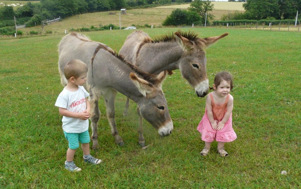 Préparation des ânes avant la balade © Le Pot au Lait