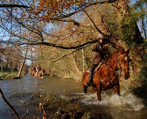 Andaines et Pail Gué de l'Anglaine © Ferme du Grand Chemin